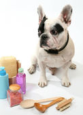 Dog and washing accessories — Stock Photo