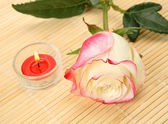 Rose flower and candle — Stock Photo