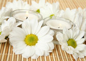 Wet daisy flowers and candles — Stock Photo
