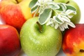 Ripe green and red apples — Stock Photo