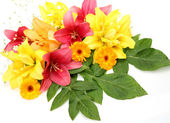 Fine pink and yellow lilies — Stock Photo