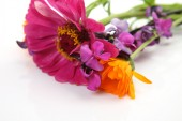 Aroma Fine flowers — Stock Photo