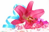 Pink lily with ribbon — Stock Photo