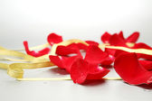 Petals of roses on white — Stock Photo