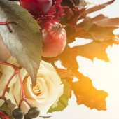 Still life with autumn apples, rose and wild grape — Stock Photo