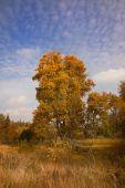 Golden autumn time — Stock Photo