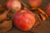 红色成熟的苹果 — 图库照片