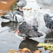 Grey doves near fountain, townhall reflection and autumn leaves — Stock Video #56992247