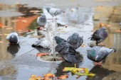 Grey doves near fountain, townhall reflection  — Stock Photo