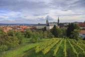 Vineyard and cathedral in Bamberg, Germany — Stock Photo