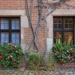 House windows with flowers, vines and brick wall in Nuremberg — Stock Photo #61041501