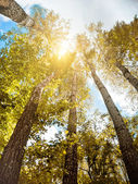 Summer trees in park — Stock Photo