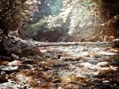 Bosque profundo — Foto de Stock