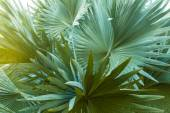 Palm leaves — Stock Photo