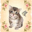 Fluffy kitten with roses and butterfly.  Vintage postcard.  Imit — Stock Vector #79615596
