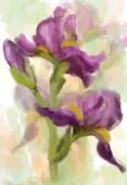 Iris çiçekler. vektör — Stok Vektör