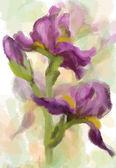 Iris blommor. vektor — Stockvektor