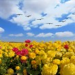 Flowers field with flying birds — Stock Photo #52490327