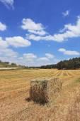 Stack of slanted wheat — Stock Photo
