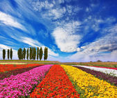 Bright colorful flowers field — Stock Photo