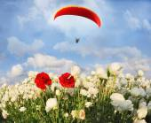 Big red parachute over field — Stockfoto