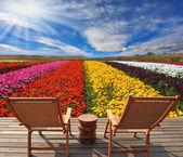 Very beautiful bright flower fields — Stock Photo