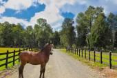 Lovely bay colt  — Stock Photo