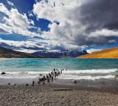 National Park Torres del Paine in Chile — Stock Photo