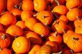 Podzimní dovolená - halloween — Stock fotografie