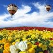 Balloons flying over field — Stock Photo #54791251