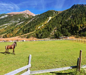 On valley grazing groomed horse farm — Stock Photo