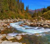 Rapid stream of forests — Stock Photo