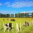 Rural idyll in Chilean Patagonia — Stock Photo #57307051
