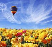 Balloon flies over orange buttercups field — Stock Photo