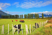 Rural idyll in Chilean Patagonia — Stock Photo