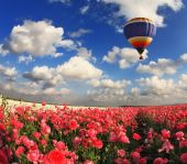 Multi-color balloon above fields with buttercups — Stock Photo