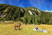 Groomed horse farm on green lawn — Stock Photo