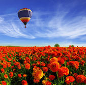 Multicolored balloon over field of buttercups — Stock Photo