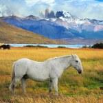 White horse grazing — Stock Photo #62675297