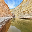 Unique canyon in Israel - Ein Avdat — Stock Photo #67151593