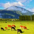 Rural idyll in Chile — Stock Photo #67151665