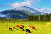 Rural idyll in Chile — Stock Photo