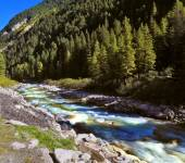 Mountain stream in coniferous forest — Stock Photo