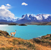 Emerald Lake Pehoe with guanaco — Stock Photo