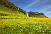 Iceland in  summer day — Foto Stock
