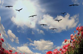 Flock of cranes flying — Stock Photo