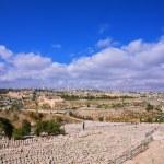 Ancient Jewish cemetery — Stock Photo #70585697