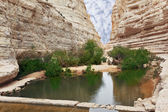 Canyon Ein Avdat and creek Zin — Stock Photo