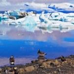Polar vogels op de oever van de oceaan lagune — Stockfoto #72046321
