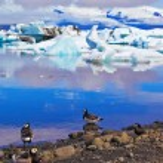 Polar fåglar på stranden av oceanen lagunen — Stockfoto #72046321